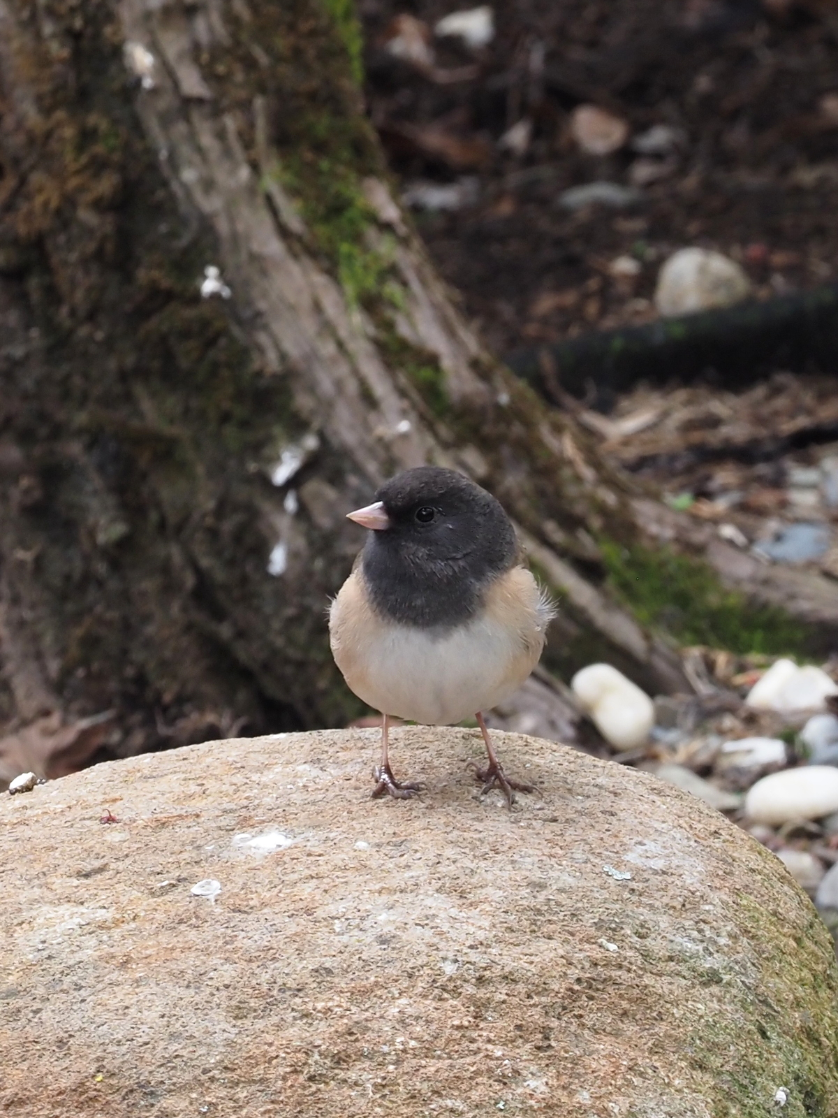 Small bird on a rock